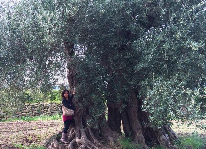プーリアにて。樹齢900年のオリーブの木と共に